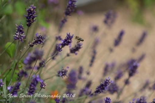 Bees in bloom