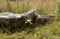 The old log
